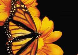 Gusano y mariposa...